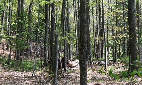 still spring woods